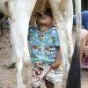 Sữa tươi nguyên chất chính hiệu