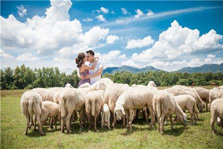 Ảnh cưới đẹp với đàn cừu ở Hồ Cốc