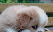 Chó nhà hàng xóm mất mà cả nhà tôi buồn và bệnh một tháng