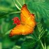Em là bướm mãi mãi