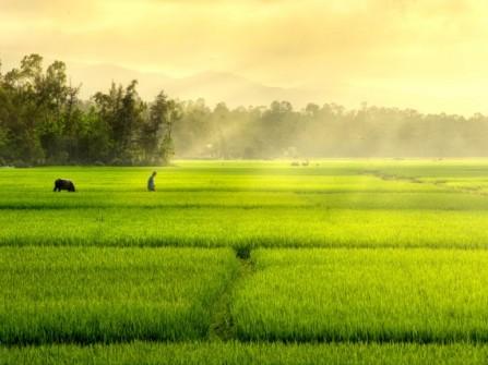 Công ty du lịch Văn Hóa Việt
