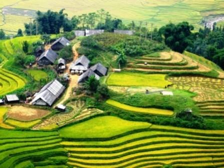 Hạnh Dung Tourist