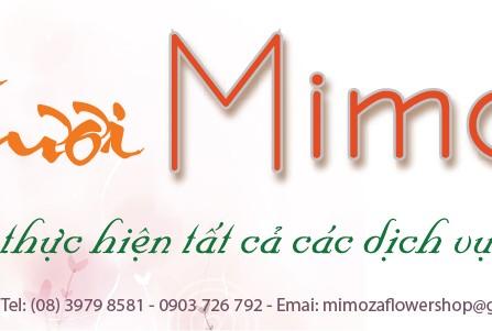 Mimoza Flower