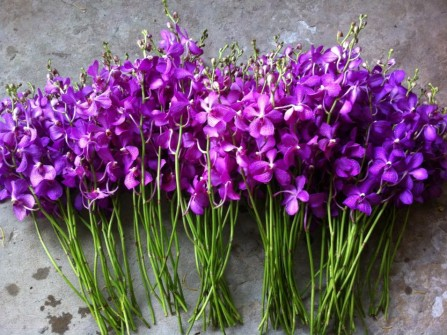 Nguyễn Linh Orchids