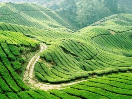 Địa điểm trăng mật Thuần Việt Travel